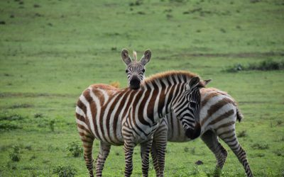 Album photo safari Kenya – Avril 2018